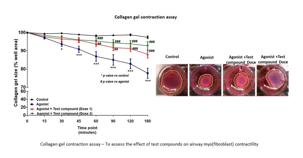Collagen gel contraction assay