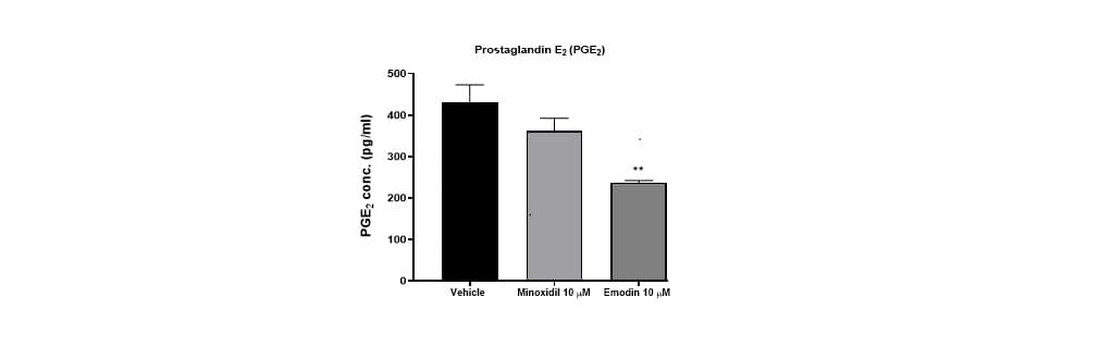 Human follicle dermal papilla cells and Inflammation