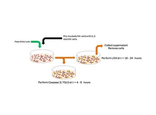 Immuno-Oncology 1
