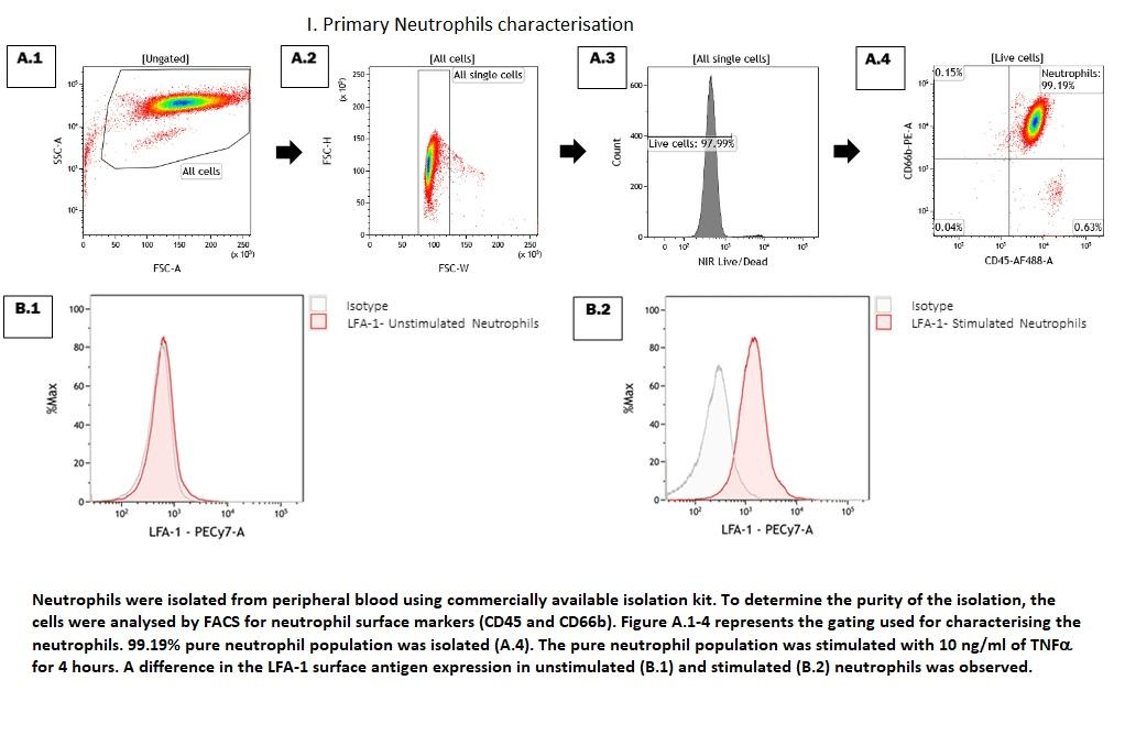 Primary Neutrophils characterisation