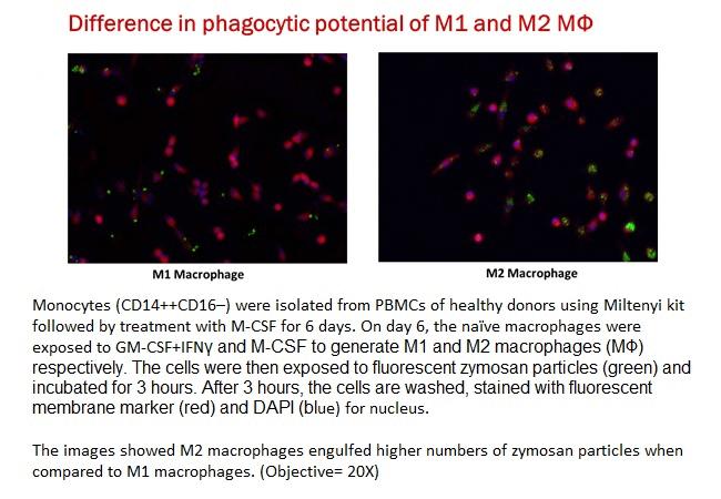 Phenotype based imaging 10