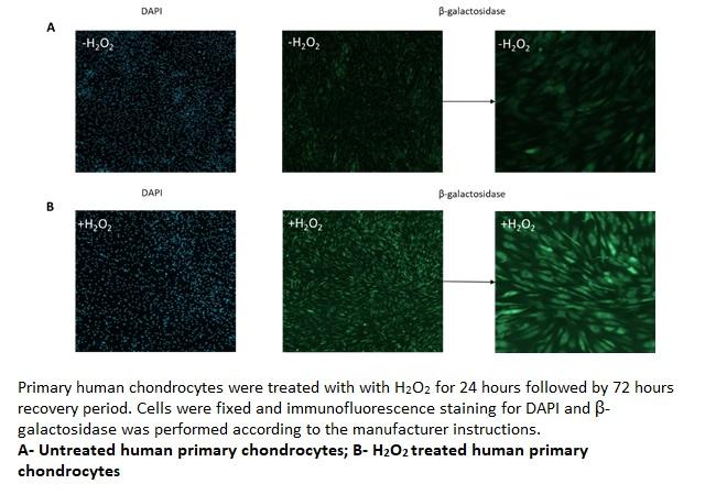 Phenotype based imaging 14