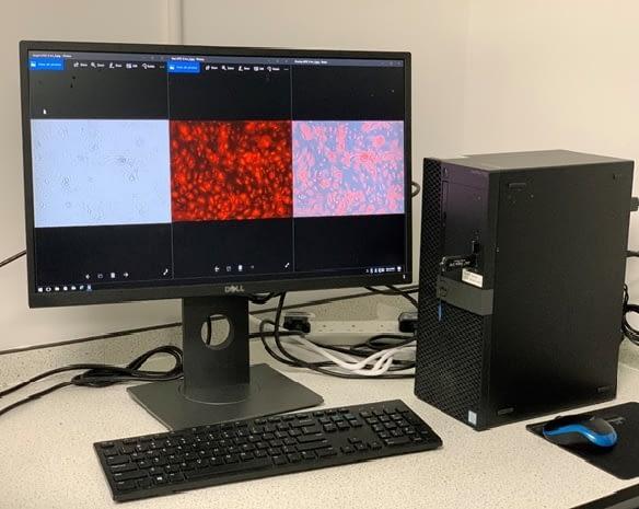 Phenotype based imaging 2