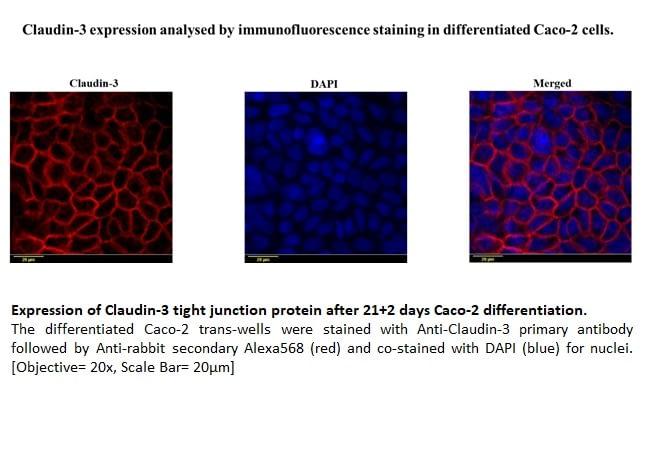 Phenotype based imaging 4